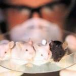 Tests cosmétiques sur les animaux : encore au 21ème siècle ?