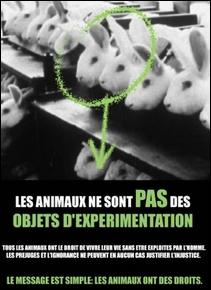 Visuel Les animaux ne sont pas des objets d'expérimentation