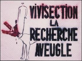 Visuel Vivisection la recherche aveugle