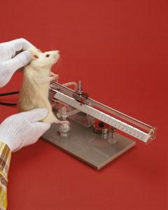 «Cours de biologie sur souris de laboratoire»
