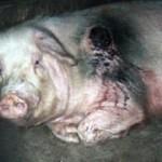Mardi 27 mars – Arte – Doit-on encore manger des animaux ?