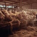 La viande dévaste la planète…