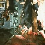 Se passer de viande : une idée qui fait (trop) doucement fait son chemin…