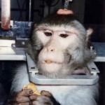Marché de la vivisection : Daniel Vasella (Novartis) ne peut PAS être un génocidaire