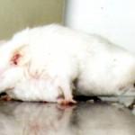 Les autorités AUSSI testent les cosmétiques sur les animaux – avec NOS impôts