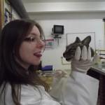 Dissections de chats au Brésil : l'apprentissage de la barbarie