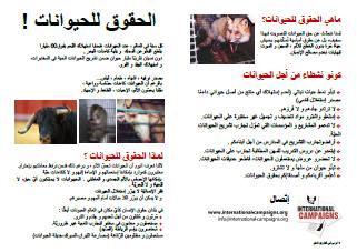 Tract droits des animaux (en arabe)