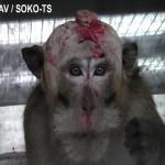 Allemagne : un cauchemar vivant pour des primates
