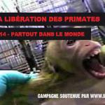 Semaine pour la Libération des Primates – 11 au 19 octobre 2014