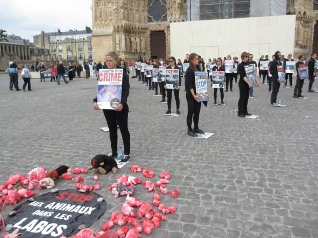 Opération Reims CONTRE la vivisection