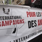 International Campaigns – Rétrospective 2015