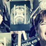 NIEDERHAUSBERGEN – Marche contre le business des primates pour la vivisection – Dimanche 16 octobre 2016