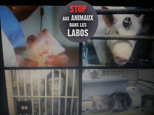 Vandoeuvre les Nancy - Journée Mondiale Animaux dans les laboratoires