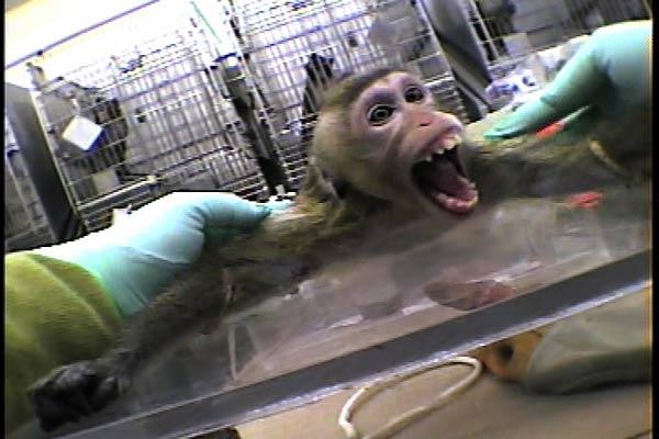 La vivisection débarque à l'ïle Maurice