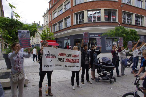 Amiens - Chevelu - Justice pour TOUS les animaux