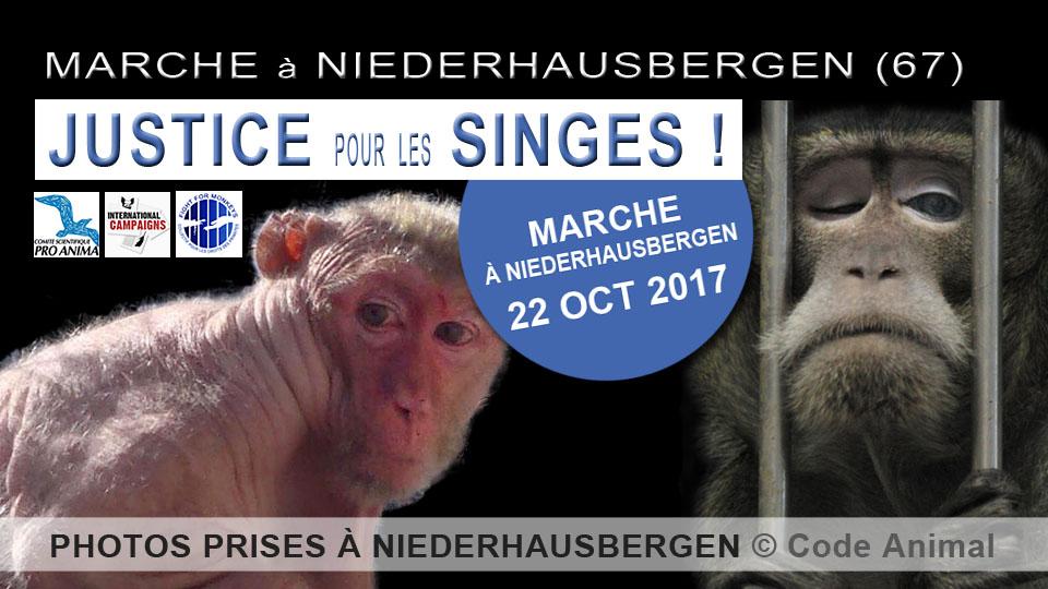 JUSTICE POUR LES SINGES DÉTENUS À NIEDERHAUSBERGEN
