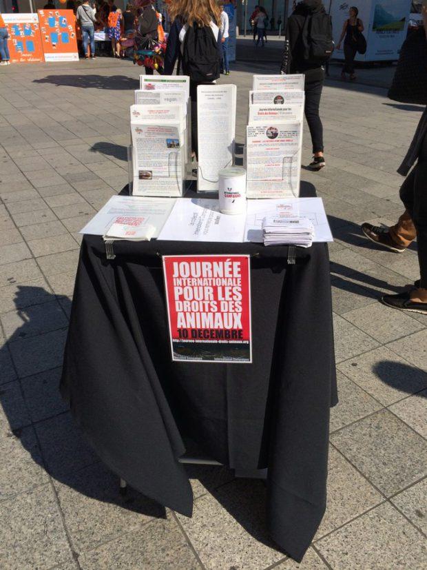 International campaigns lyon