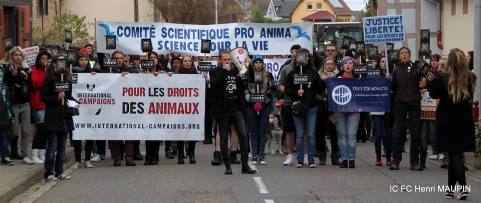 Marche sur Niederhausbergen - Centre de primatologie - 22 octobre 2017