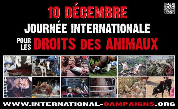 Journée Internationale pour les droits des animaux