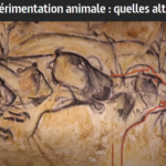 24 avril 2019 : la vivisection au programme d'Arte